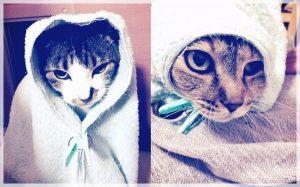 佐藤健の愛猫